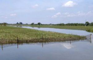 Petani Korban Banjir di Kudus Mulai Ajukan Klaim Asuransi