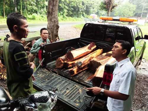 TANGKAP: Polisi hutan berhasil menangkap pencuri kayu di hutan. (ISTIMEWA/LINGKAR.CO)