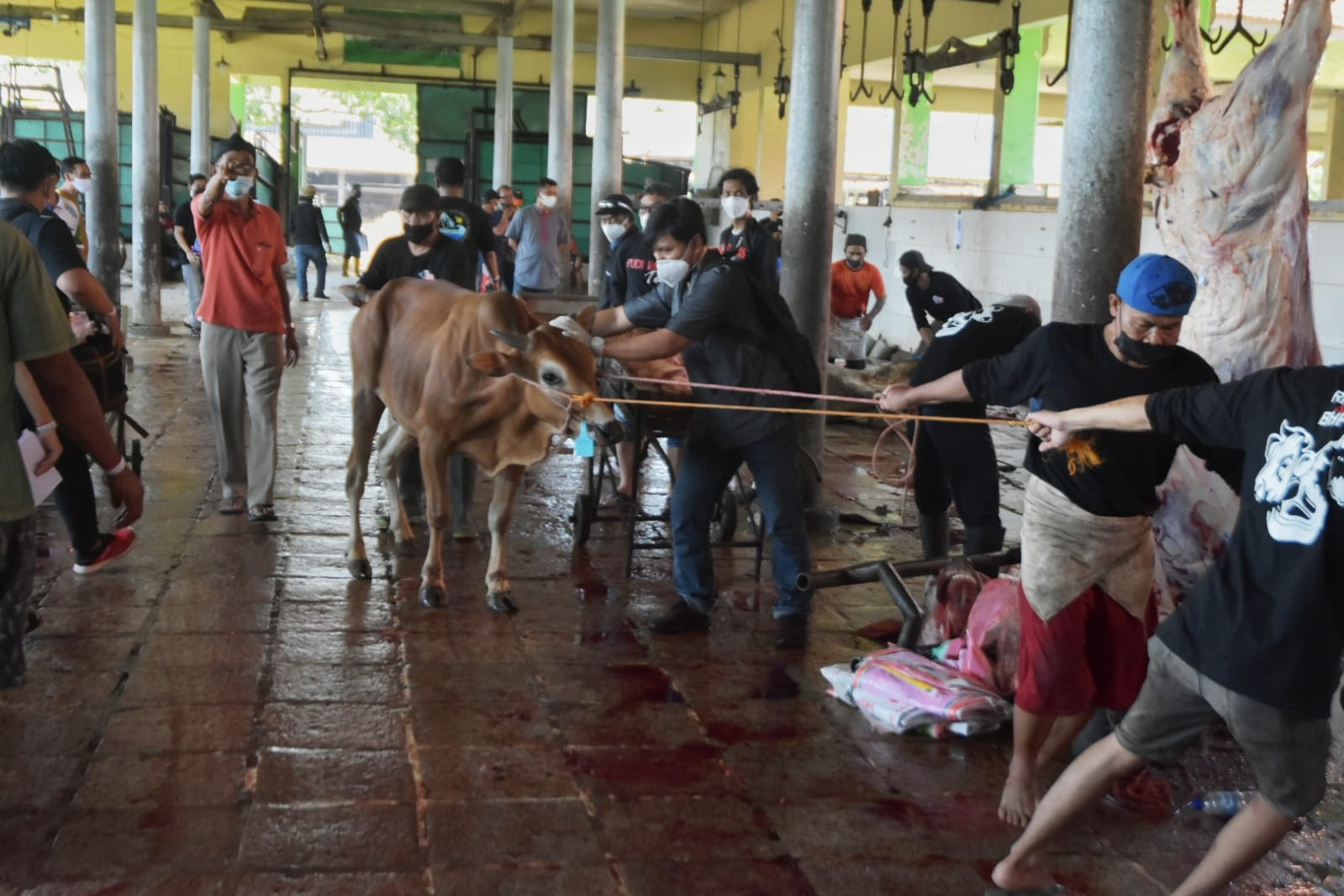 Suasana Penyembelihan hewan di RPH Penggaron, pada Iduladha 1442H/2021M ini terjadi kenaikan penyembelihan hewan di RPH Penggaron. DINDA RAHMASARI TUNGGAL SUKMA/LINGKAR.CO