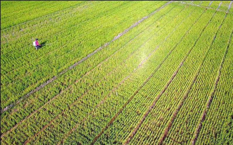 Ilustrasi lahan pertanian, Anggota Komisi IV DPR RI, Andi Akmal Pasluddin, meyakini bahwa sektor pertanian Indonesia akan lebih maju lagi. FOTO: ANTARA/Lingkar.co