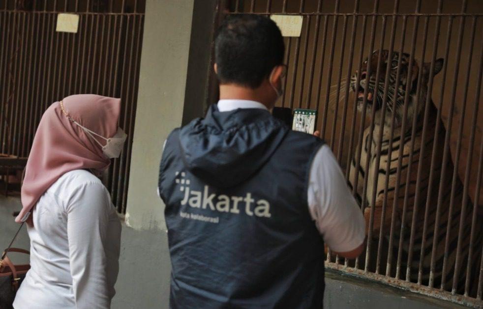 Harimau Sumatera yang positif Covid-19, di tempat isoman Taman Margasatwa Ragunan Jakarta, Minggu (1/8/2021). FOTO: FB @aniesbaswedan/LIngkar.com