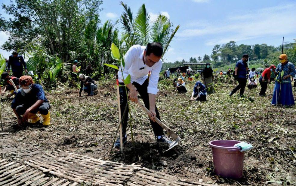 Presiden Joko Widodo, menanam pohon mangrove bersama masyarakat, di Desa Tritih Lor, Cilacap, Jateng, Kamis (23/09/2021). FOTO: BPMI Setpres/Lingkar.co