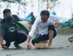 Lepasliarkan Tukik di Pantai Kemiren, Cilacap, Presiden: Agar Tidak Punah